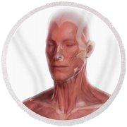 Facial Anatomy Round Beach Towel