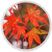 Fall Color Maple Leaves At The Forest In Kochi, Japan Round Beach Towel
