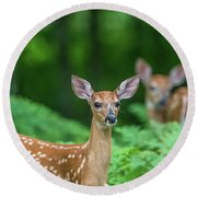 Fawns Round Beach Towel