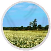 Field Of Queen Anne's Lace  Round Beach Towel