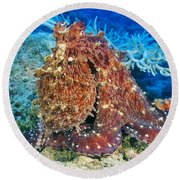 Fiji, Day Octopus Round Beach Towel