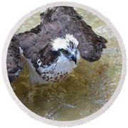Fish Eagle Bird Playing In Water Round Beach Towel