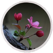 Flowering Crabapple Round Beach Towel