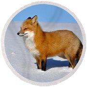 Fox Round Beach Towel