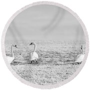 Geese Surrounded By Hoarfrost Round Beach Towel