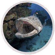 Giant Grouper, Great Barrier Reef Round Beach Towel