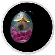 Giant Ostracod Round Beach Towel