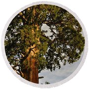 Giant Sequoia Round Beach Towel