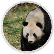 Gorgeous Black And White Giant Panda Bear Walking Round Beach Towel