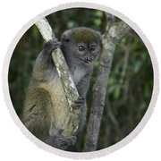 Gray Bamboo Lemur Round Beach Towel