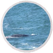 Gray Whale Round Beach Towel