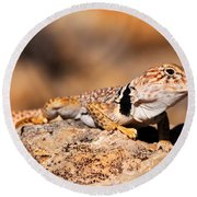 Great Basin Collared Lizard Round Beach Towel