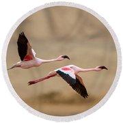 Greater Flamingos Phoenicopterus Roseus Round Beach Towel