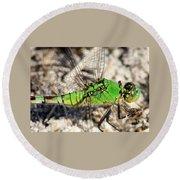 Green Dragonfly Closeup Round Beach Towel