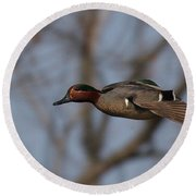Green-winged Teal Flies Over Round Beach Towel