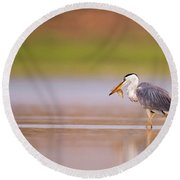 Grey Heron Ardea Cinerea Round Beach Towel