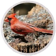 Hungry Cardinal Round Beach Towel