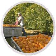 Harvesting Navel Oranges Round Beach Towel