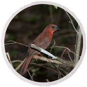 Hepatic Tanager At The Coba Ruins Round Beach Towel