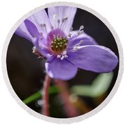 Hepatica 4 Round Beach Towel