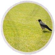 Hooded Crow Bird Gathering Hay Round Beach Towel
