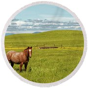Horse Grazing Round Beach Towel