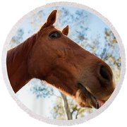 Horse In The Paddock Round Beach Towel