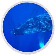 Humpback Whale Round Beach Towel