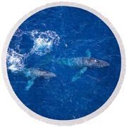 Humpback Whales Aerial Round Beach Towel