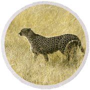 Hunting Cheetah Round Beach Towel