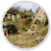Hunting Lionesses Round Beach Towel