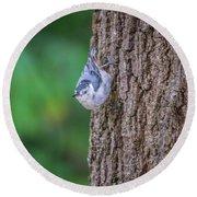 Huthatch Bird  Nut Pecker In The Wild On A Tree Round Beach Towel