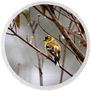 Img_0001 - American Goldfinch Round Beach Towel