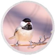 Img_0001 - Carolina Chickadee Round Beach Towel