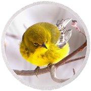 Img_0001 - Pine Warbler Round Beach Towel