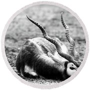 Indian Antelope Round Beach Towel