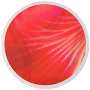Into Cattleya Orchid Round Beach Towel