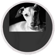 Italian Greyhound Portrait In Black And White Round Beach Towel