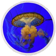 Jellyfish At California Academy Of Sciences In San Francisco, California Round Beach Towel