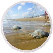 Jellyfish On The Beach  Round Beach Towel