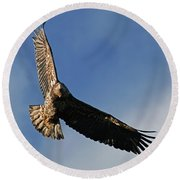 Juvenile Bald Eagle Round Beach Towel