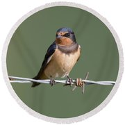 Juvenile Barn Swallow Round Beach Towel