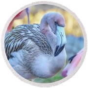 Juvenile Flamingo Round Beach Towel