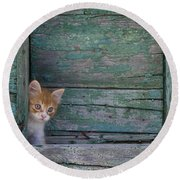 Kitten Peeking Out Round Beach Towel