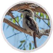 Kookaburra On A Branch Round Beach Towel