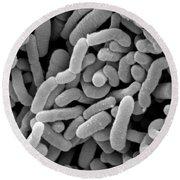 Lactobacillus Acidophilus And L. Casei Round Beach Towel