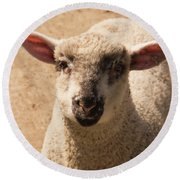 Lamb Looking Cute. Round Beach Towel