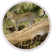 Leopard In The Forest Round Beach Towel