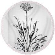 Lily Of The Nile Round Beach Towel