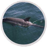 Long-beaked Common Dolphins In Monterey Bay 2015 Round Beach Towel